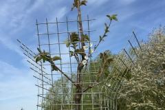 Landschap-inrichting-hoogstamfruit-2